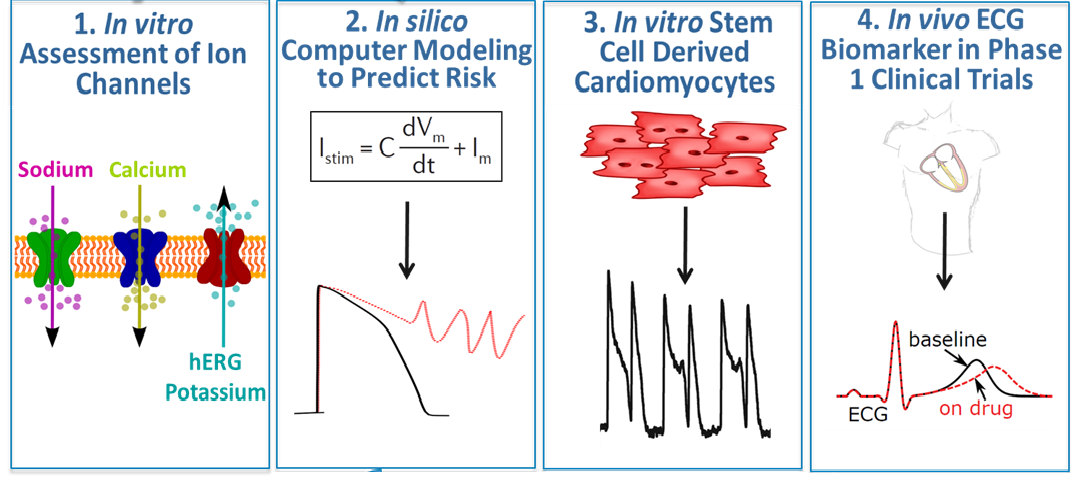Depiction of the four stages of CiPA: In vitro assessment of ion channels, in silico computer modeling to predict risk, in vitro stem cell derived cardiomyocytes, and in vivo ECG biomarker in Phase 1 clinical trials
