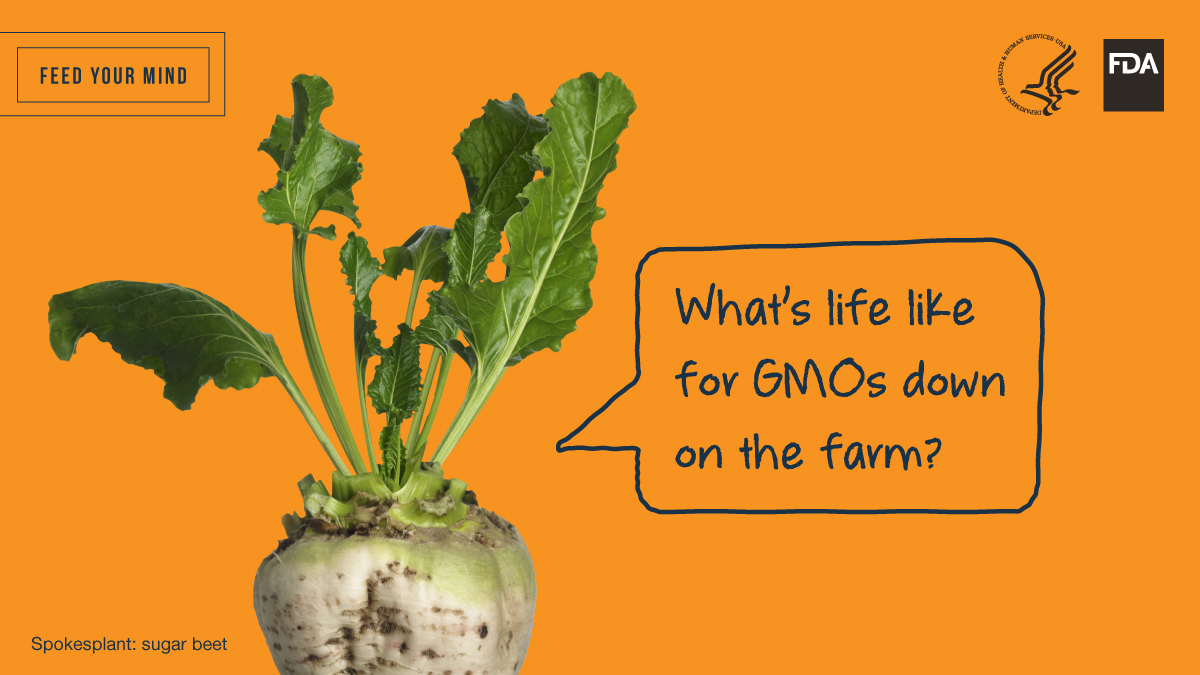 Feed Your Mind Twitter Image - Sugar Beet