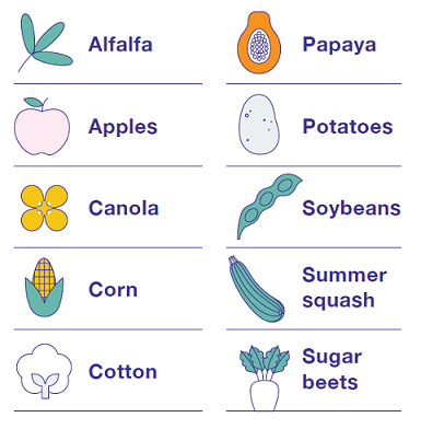 GMO Crops Currently Available in the US: Alfalfa, Apples, Canola, Corn, Cotton, Papaya, Potatoes, Soybeans, Summer Squash, and Sugar Beets