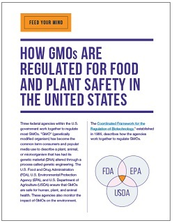 How GMOs Are Regulated