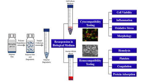 Image of In vitro biological evaluation of degradants from bioresorbable medical device polymers