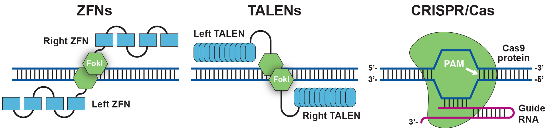 Genome Editing: ZFNs, TALENs and CRISPR/Cas