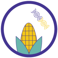 Making a GMO Plant, Step by Step - Insert