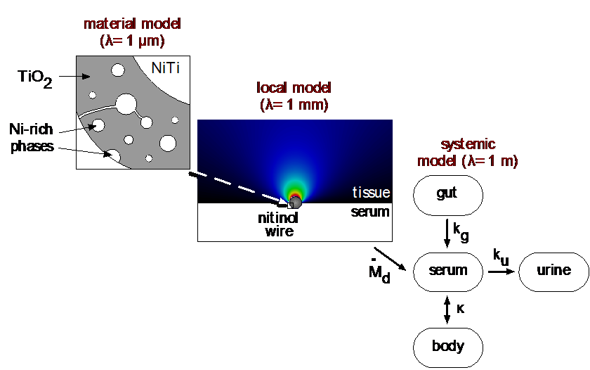 Image of multi-scale model for nickel exposure