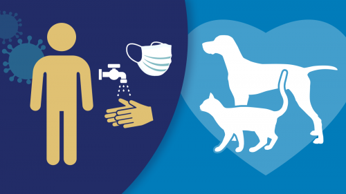 simple infographic featuring icons from left to right of the coronavirus, a human figure, hands washing under running water, a face mask and a dog and cat encircled by a heart shape