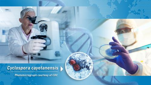 photo montage showing a scientist looking into microscope, a scientist preparing a sample in a Petri dish, a world map, a DNA double helix strand, and a photomicrograph of Cyclospora cayetanensis oocysts in a stool sample with text that reads Cyclospora cayetanensis photomicrograph courtesy of CDC