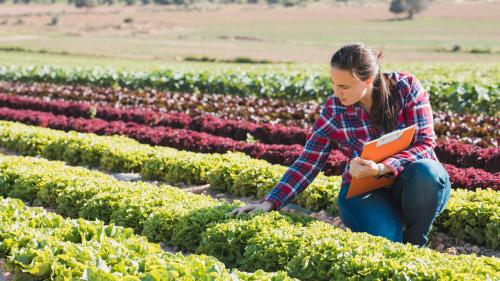 young woman holding a clip board and inspecting lettuce in a field