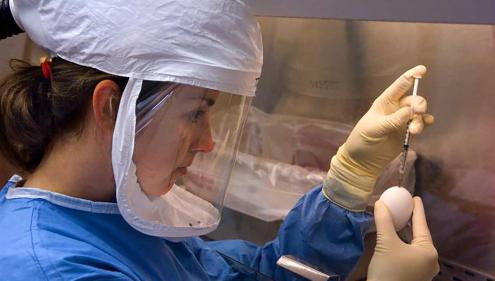 A CDC microbiologist conducts an influenza experiment in a biological safety cabinet. She is wearing a powered air purifying respirator (PAPR), which filters the air she breathes. (CDC/Greg Knobloch)