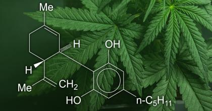 Cannabis leaves and Cannabidiol (CBD) chemical structure montage