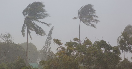 palm trees swaying in a storm