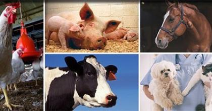 collage of animal pictures including chicken, pig, cow, horse, dog and cat