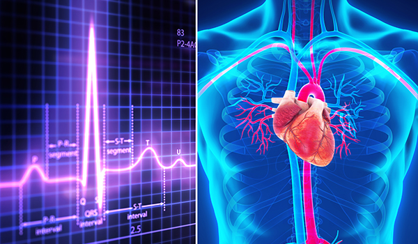 EKG and human heart illustration (600x350)
