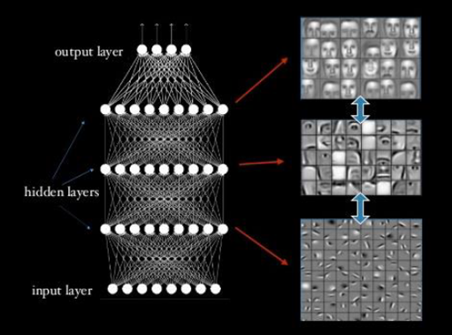 "Figure 2. In deep learning, artificial neurons (white circles) are connected in neural networks with one or more ""hidden"" layers of neurons between the input layer (where the data is first entered) and the output layer that signals which choice is to be made in a learning task (in this case, recognition of human faces). By using a training set in which the desired final output is known, inputs and thus outputs (represented by the lines connecting circles) in these networks can be adjusted stepwise so that the network learns to make good decisions consistently. A key characteristic of this learning approach is that successive hidden layers learn to recognize features of greater and greater complexity by combining simpler features from the previous layer. Examples of features captured in successive hidden layers might be edge, eye, and face (as shown here for facial recognition) or waveform, phoneme, word, and sentence for speech recognition. In practice, these networks can consist of thousands of neurons with many hidden layers and features."