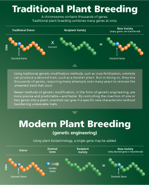 Text about Modern Plant Breeding