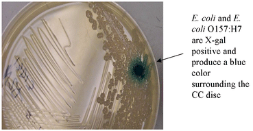 E. coli and E. coli O157:H7 are X-gal positive and produce a blue color surrounding the CC disc