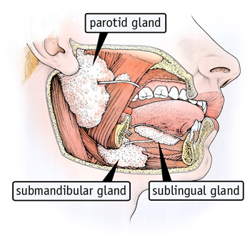 Pleasant Dry Mouth Dont Delay Treatment Fda Wiring Digital Resources Bocepslowmaporg