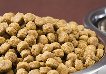 dry pet food in a dish (350x245)