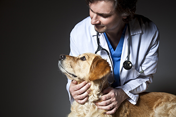 Veterinarian and older dog