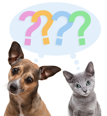 dog and cat with question marks in thought bubble (350x379)