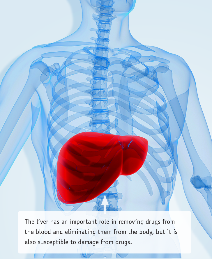 Acetaminophen and Liver Injury illustration