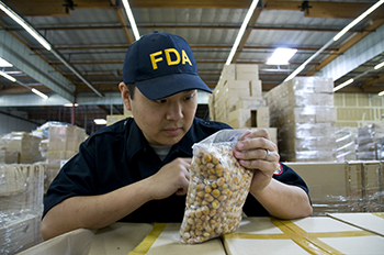 An FDA field inspector examines imported gingko nuts